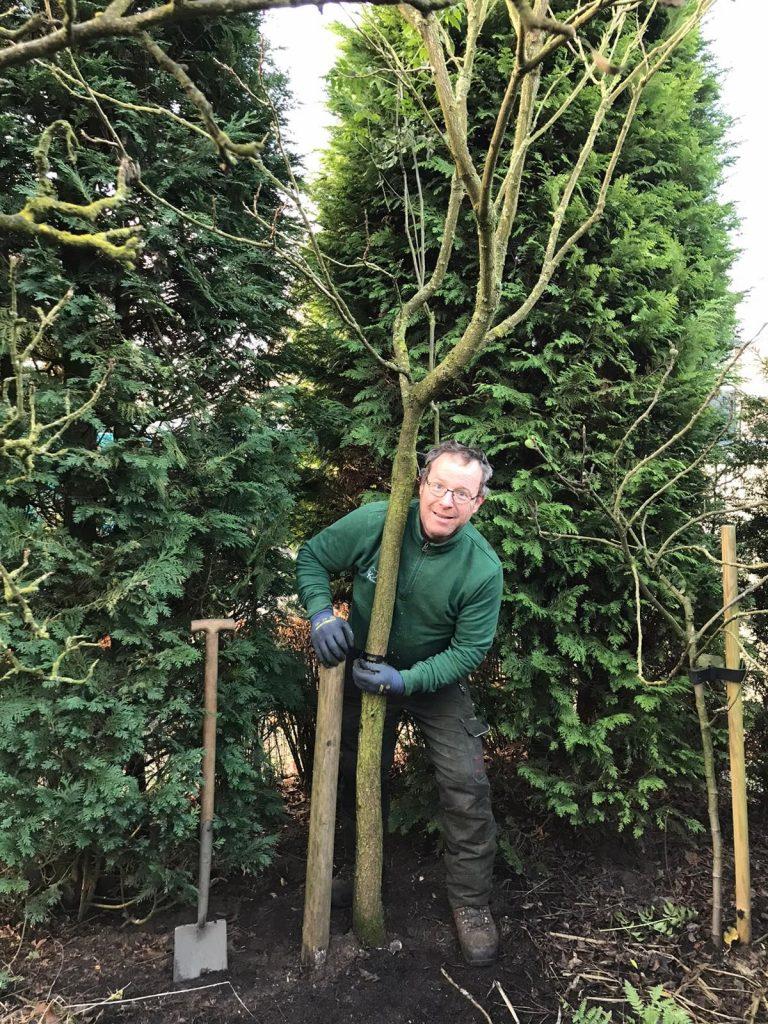 Ook voor een kleine tuin zijn er geschikte soorten bomen.